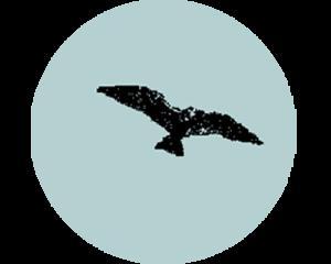 stip-vogel2